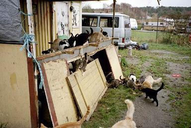 Katterna på Meros, Foto: Mogge