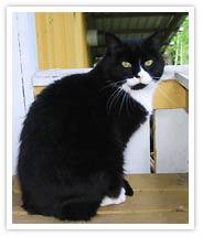 Hittekatten Kompis har gett katthemmet sitt namn. Foto: Katthemmet Kompis
